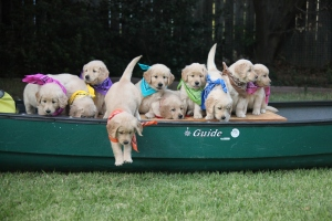 puppies-in-canoe