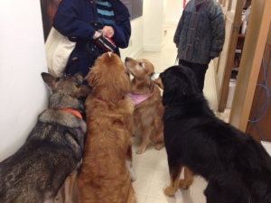 Dogs at Museum