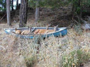 deer in canoe CBC north by northwest's photo